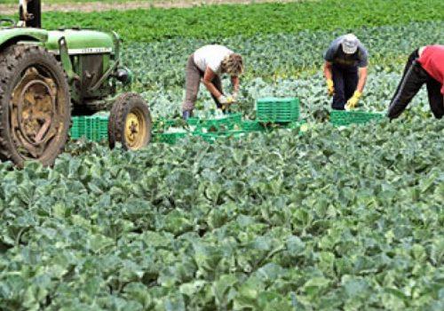 Краен рок за пријавување на земјоделците за субвенционирање е 31 Јули 2020